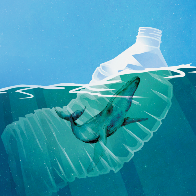 a cartoon image of a whale trapped in a plastic bottle in the sea